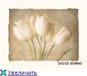 Цветы, букеты 4e804b8259e9t