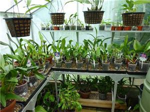 Размещение орхидей 07369bfbf067t