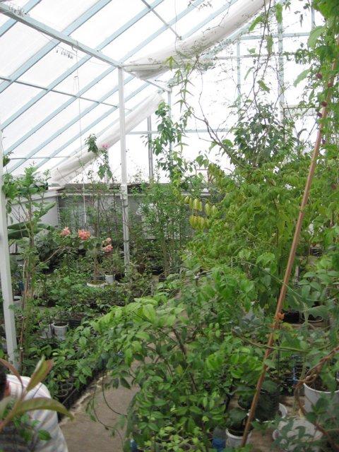 Растения из Нижегородской оранжереи 074990a73de0