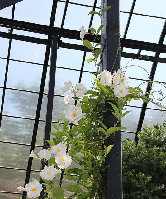 Экскурсия по Ботаническому Саду 28f1ffe405c6