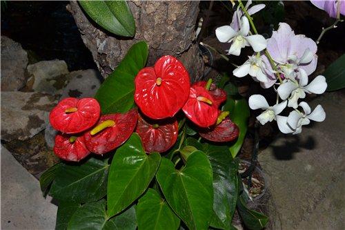 Выставка орхидей Никитского ботанического сада 577bb12cea46