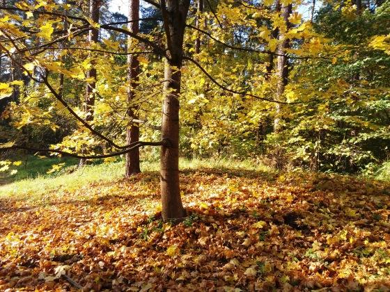 Осень, осень ... как ты хороша...( наше фотонастроение) - Страница 8 660ad46e6e96