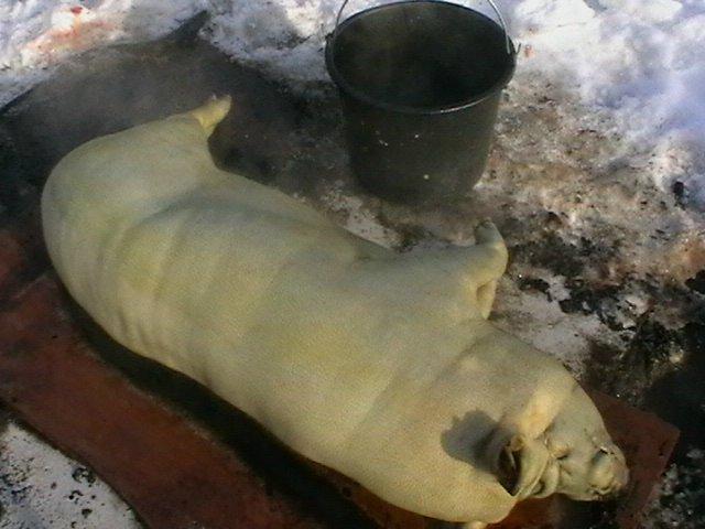 кормление - Вьетнамская вислобрюхая порода свиней (содержание, кормление и разведение) - Страница 3 2c8f0de70b59