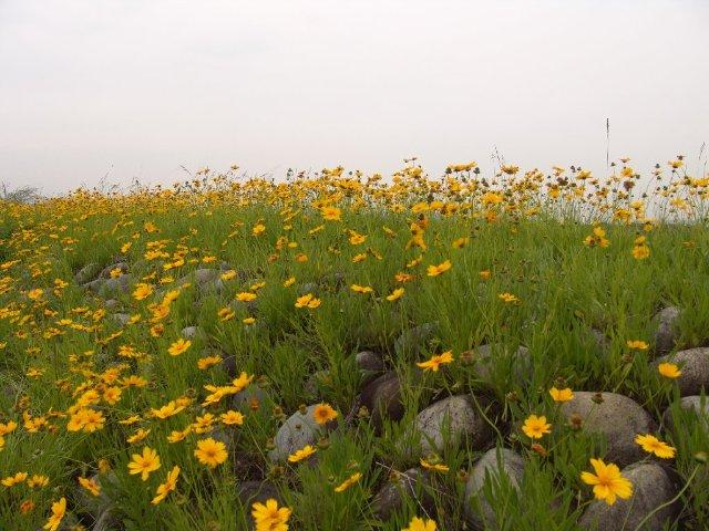 Японские цветы 04fd0afb0ae9
