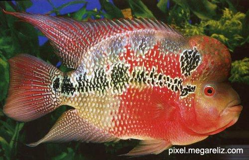 Первый аквариум - Страница 2 D6689be494a5
