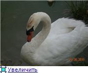 Птичий двор Db3ab8e0d039t