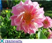 Георгины в цвету - Страница 2 6c849bee394et