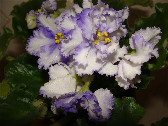 Весеннее  цветение (Хваст от Веры) - Страница 8 34cf55176154