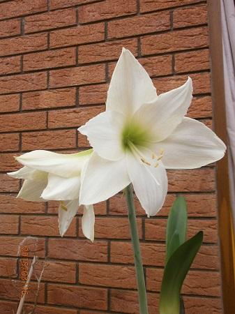 Разводите ли дома цветы и какие? - Страница 34 68c6fab4ab8e