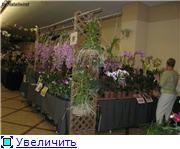 Цветочные выставки и ярмарки в г. Хабаровске. - Страница 2 585da132ae95t