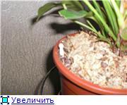Антуриум (Anthurium) - Страница 3 30bd2f63b9cbt