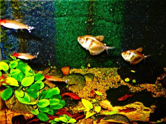 Первый аквариум - Страница 3 3d773a9b5bc2