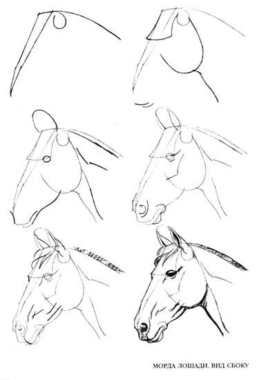 Для тех, кто хочет научится рисовать. - Страница 2 08f2d3875f0c