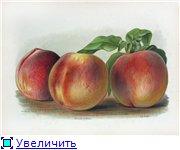 Фрукты, овощи, напитки, натюрморты 24f85a8b0a79t