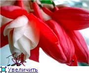 ФУКСИИ В ХАБАРОВСКЕ  - Страница 11 15f8062b5ab2t