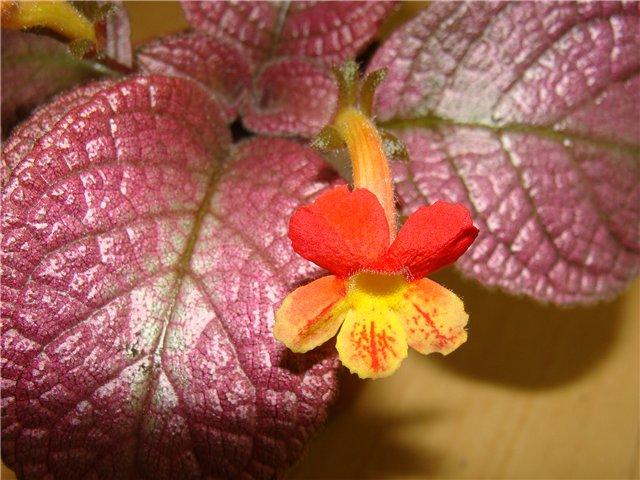 Весеннее  цветение (Хваст от Веры) - Страница 8 02a8a0462390