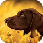 Аватары с животными - Страница 3 745ec9b675aa