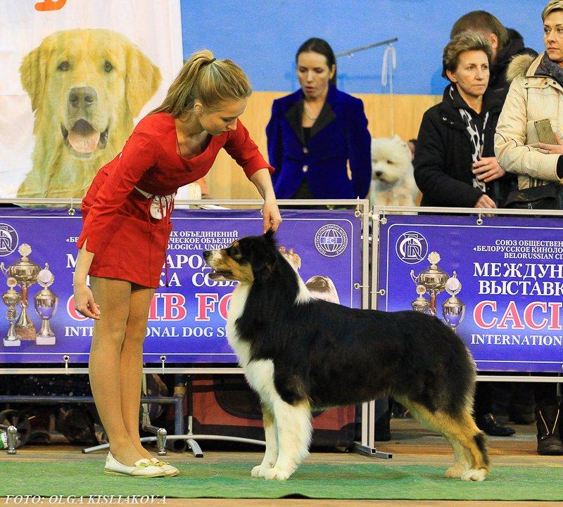 Выставочные успехи наших собак - 5 - Страница 30 F2b2ff1651ec