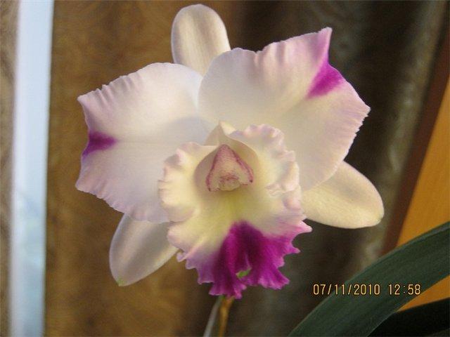 Разведение орхидей. - Страница 13 Afb0b8f00db2