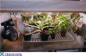 Размещение орхидей 47d806248eddt