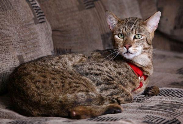 Необычные и редкие породы кошек и собак 49e15063e476