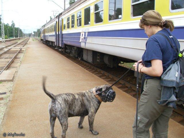Наши собаки, друзья и гости, кот Мензурка 9a5cf45739d8