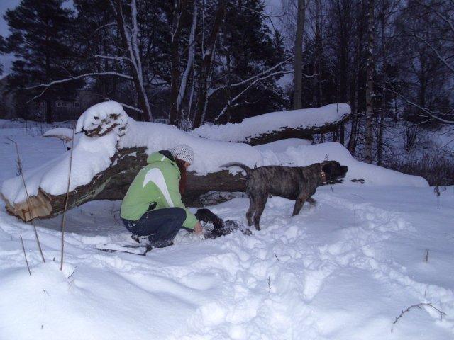 Собаки Татьяны Моисеенковой, кот Мензурка - Страница 3 D5294f57e455
