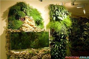 Вертикальное озеленение B9cb65365b80