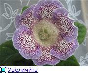 Семена глоксиний и стрептокарпусов почтой - Страница 7 9665c18d4d07t