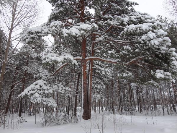 Зимняя сказка на наших фотографиях - Страница 14 Bef0bb2ac671