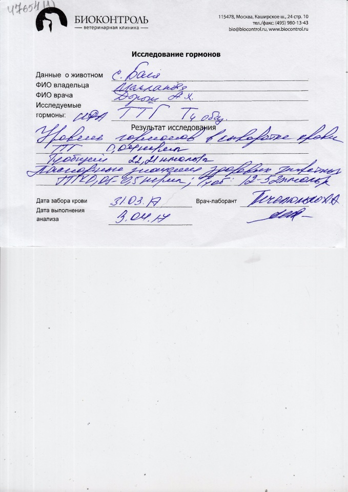 Москва, Бася (метис), 2005 г.  - Страница 7 0079a34fe012
