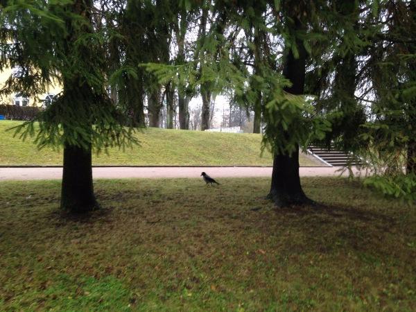""""""" Есть городок в одном прекрасном парке...""""  ( Пушкин и Екатерининский парк ) - Страница 3 A00860bd422c"""
