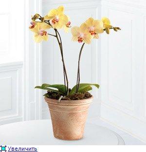 Горшки для орхидей 23498775fe9et