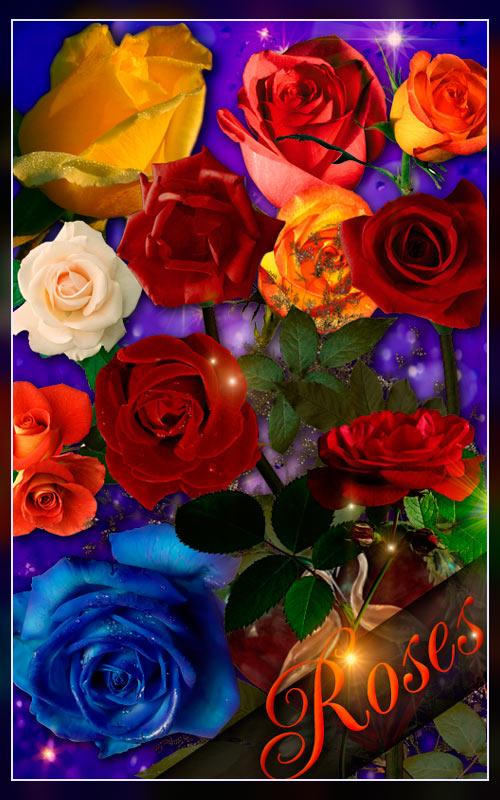 Roses | Розы E6e40ef8cb76