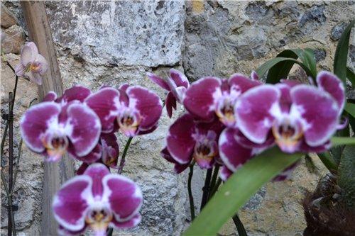 Выставка орхидей Никитского ботанического сада B1e7dc61451d