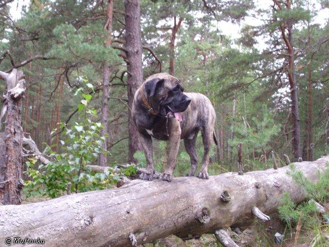 Наши собаки, друзья и гости, кот Мензурка Fc8220a56287
