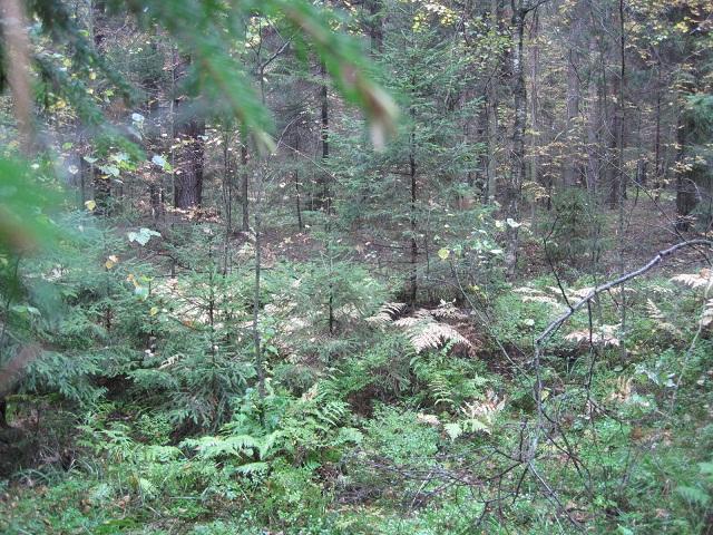 За грибами в Конаково (Тверская область, Волга)! Ae5a73ccb0b5