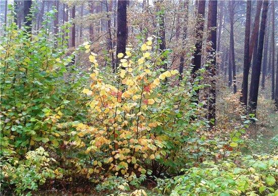 Осень, осень ... как ты хороша...( наше фотонастроение) - Страница 5 Aa742e94444a