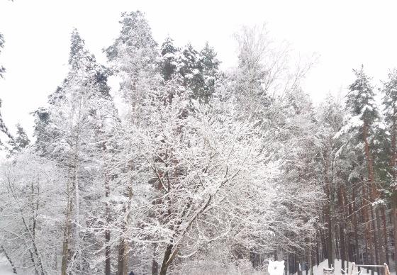 Зимняя сказка на наших фотографиях - Страница 14 1b51ec9f98ff