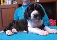 Очень красивые щенки, по низким ценам. 1f8ac3b415dct