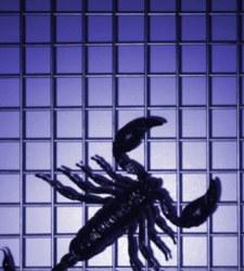 Medicina en Cuba - Página 6 Escorpion