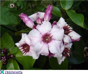 Орхидеи и прочая красота на о. Пхукет - Страница 2 E51f2b9adc88t