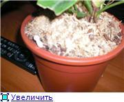 Антуриум (Anthurium) - Страница 3 C826ea2fb4c0t