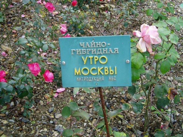 Парад хризантем в Никитском ботаническом саду. Крым  F05538797a00
