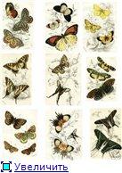 Животные, птицы и насекомые A87d7b2f9a2ct