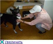 Чара - потрясающая собака! Ищет лучших хозяев! 9b3852b0e5e6t