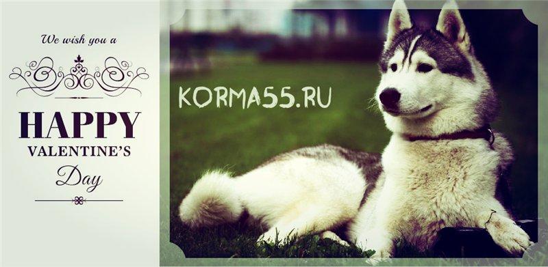 Gina Канадские корма Интернет магазин Korma55.ru 04c915c0ffa5
