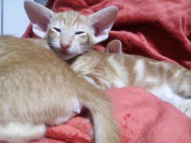Домашние любимцы Кошки и Собаки - Страница 18 355b36cb30fc