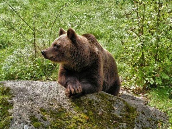 Ничто человеческое медведям не чуждо B29760055382