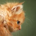 Аватары с животными - Страница 2 C669c5ce592d